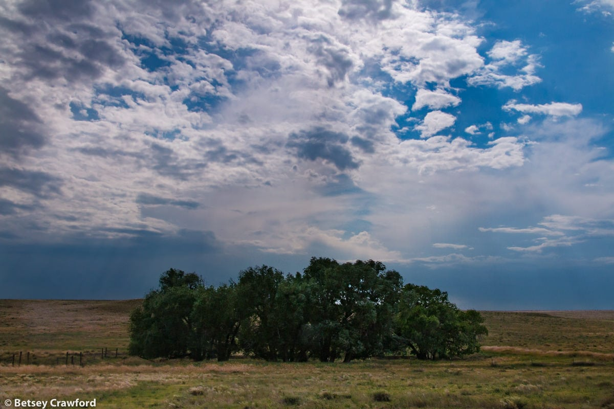 A grove of trees watered by a nearly invisible stream in the Pawnee National Grasslands, Colorado