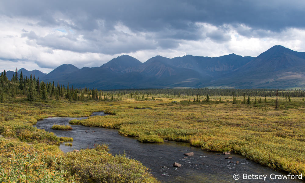 Muskeg and mountains in Denali National Park