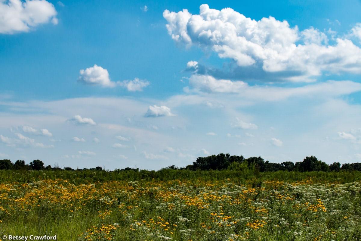 Schwarz Prairie, Osceola, Missouri