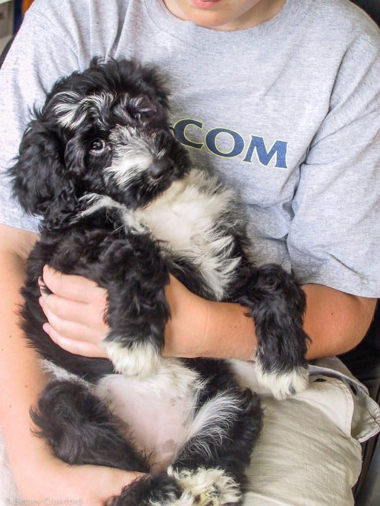 Luke holding Splash as a puppy