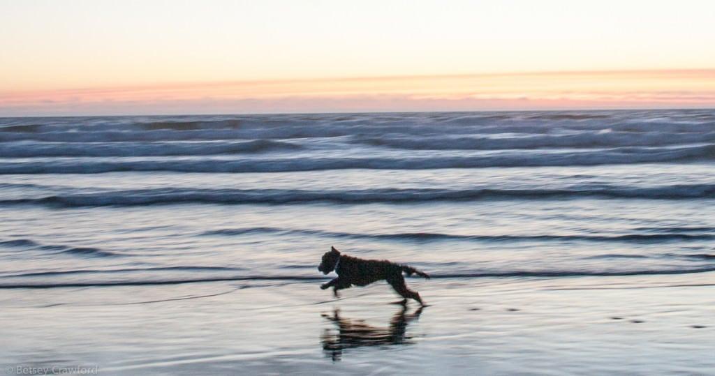 Splash on the Oregon coast