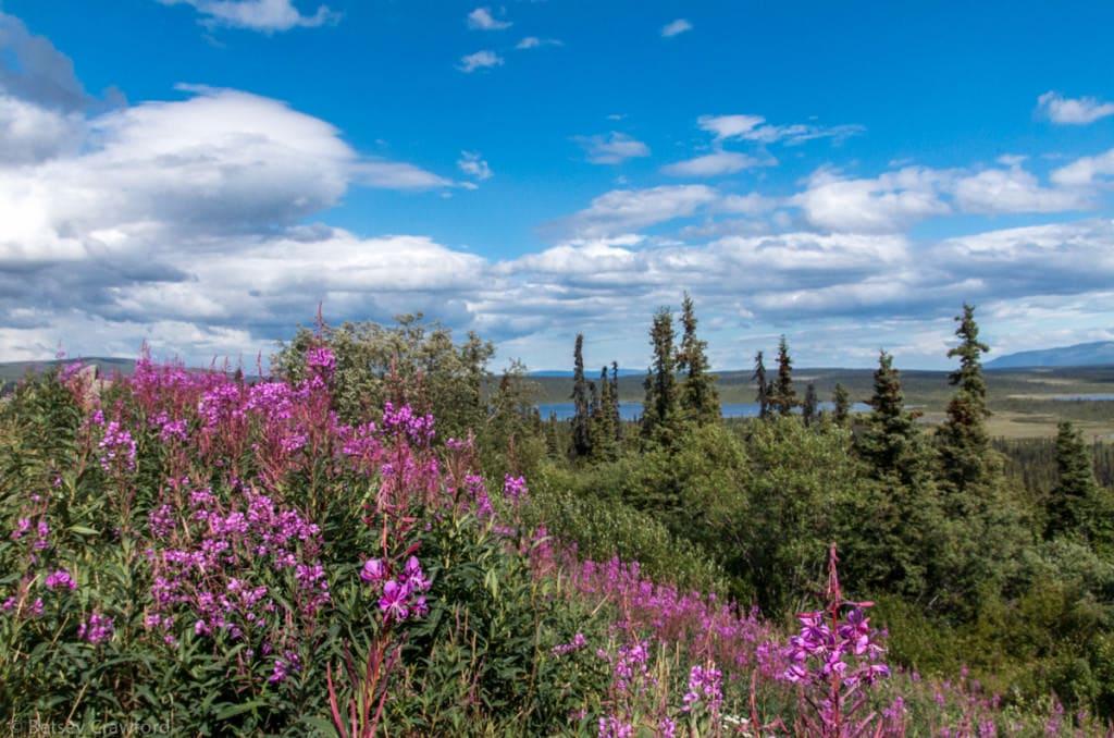 Matsu-valley-Alaska-by-Betsey-Crawford-2
