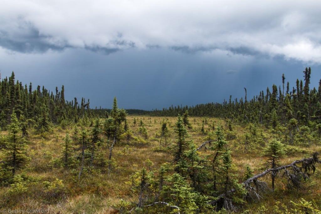 Muskeg along the Cook Inlet, Kenai, Alaska