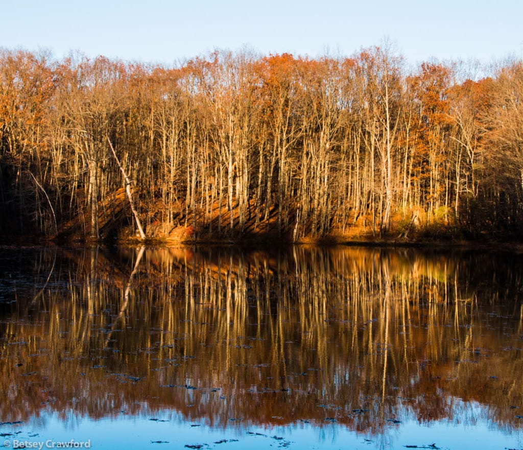 autumn-woods-pond-reflections-Genesis-farm-Blairstown-New-Jersey-by-Betsey-Crawford-2