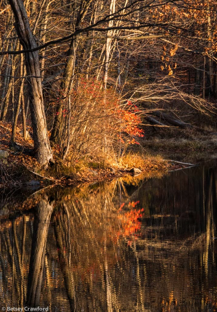 autumn-woods-pond-reflections-Genesis-farm-Blairstown-New-Jersey-by-Betsey-Crawford