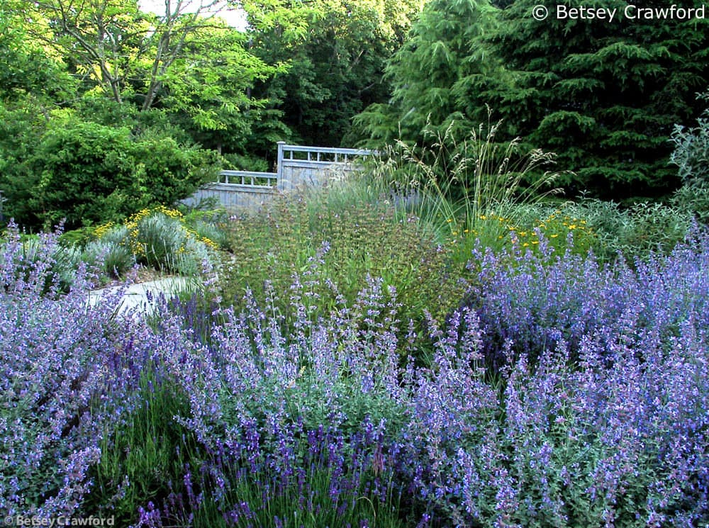 Blue flowers in an East Hampton, New York, garden. Designed and photographed by Betsey Crawford
