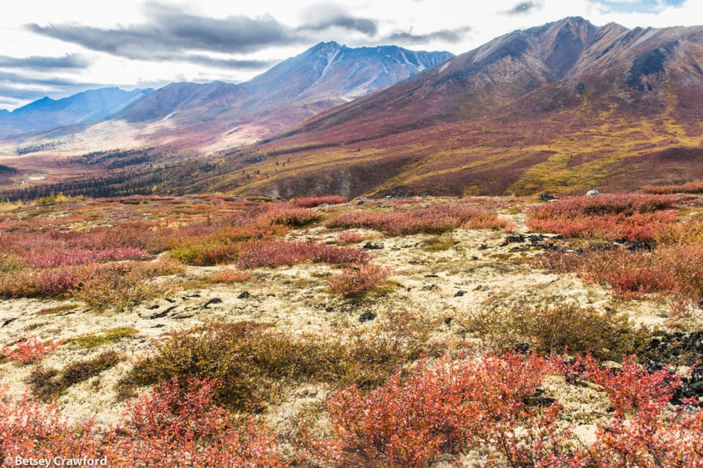 Tombstone-Territorial-Park-Yukon-Territory-Canada-by-Betsey-Crawford-2