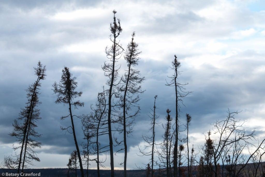 wildfire-Dalton-Highway-Alaska-by-Betsey-Crawford