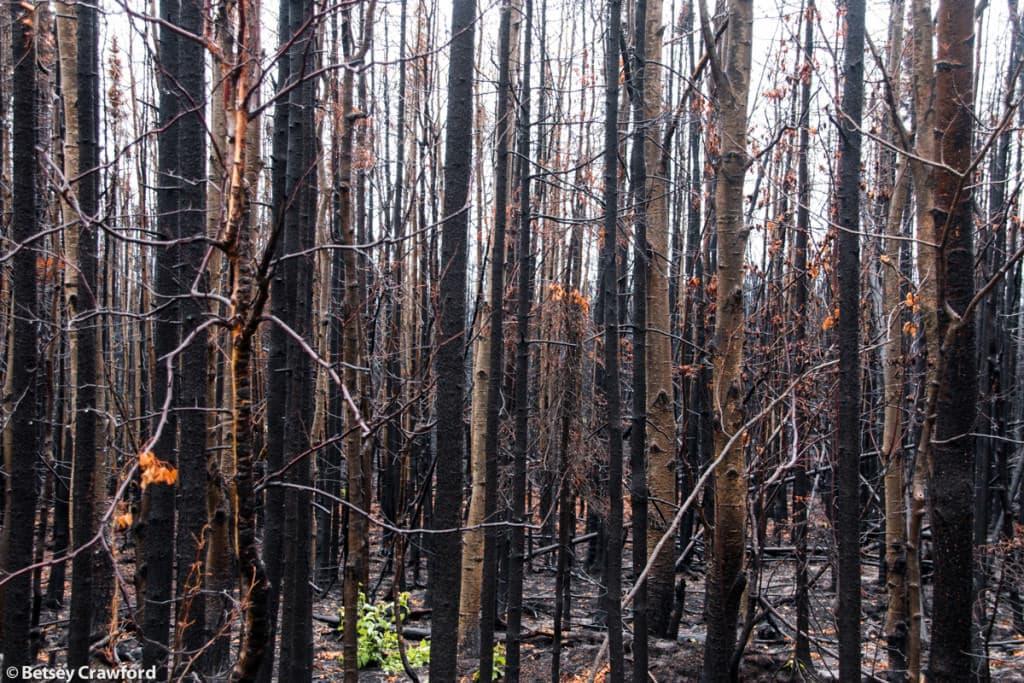 wildfire-Kenai-Wildlife-Refuge-Alaska-by-Betsey-Crawford