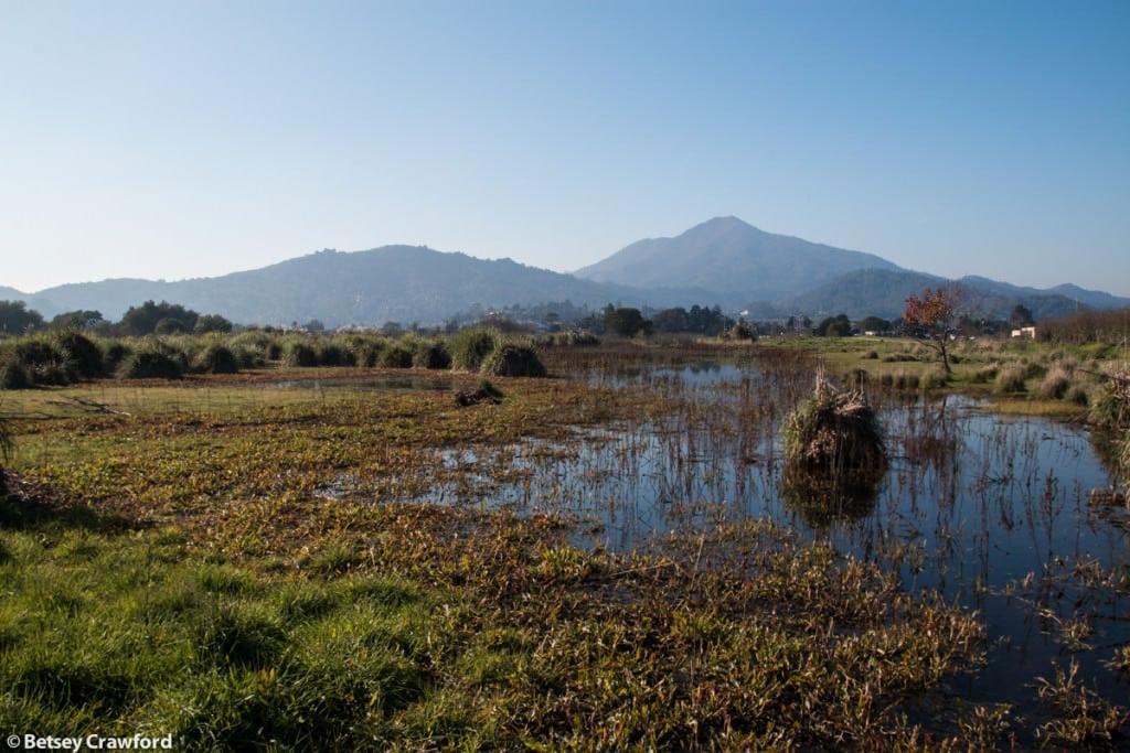 The Corte Madera Ecological Preserve, Corte Madera, California