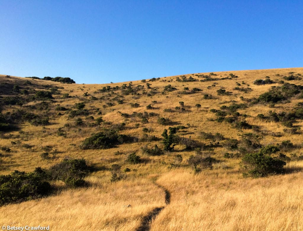 Grassland on Ring Mountain, Tiburon, California