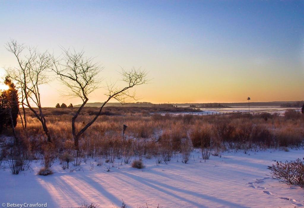 Winter beauty on Accabonac Harbor, East Hampton, New York by Betsey Crawford