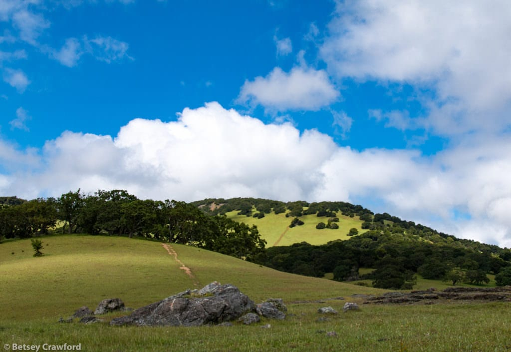 Serpentine rock outcrop on Mount Burdell in Novato, California by Betsey Crawford