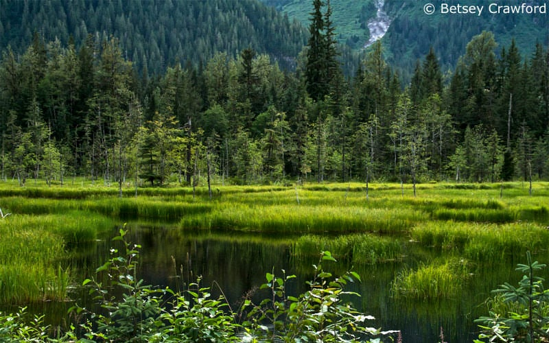 A wetland at the southern tip of the Tongass National Forest near Hyder, Alaska by Betsey Crawford