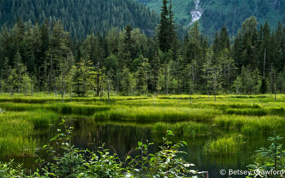 A wetland in the Tongass National Forest near Hyder, Alaska by Betsey Crawford