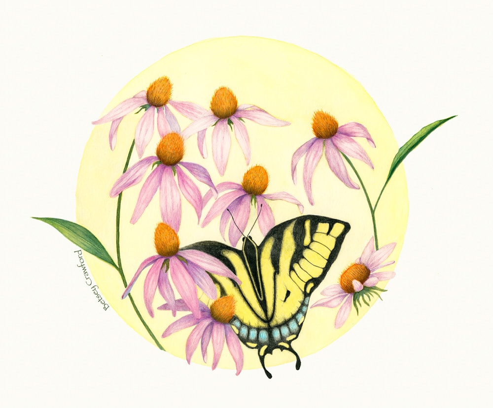 Swallowtail butterfly and purple coneflower mandala by Betsey Crawford