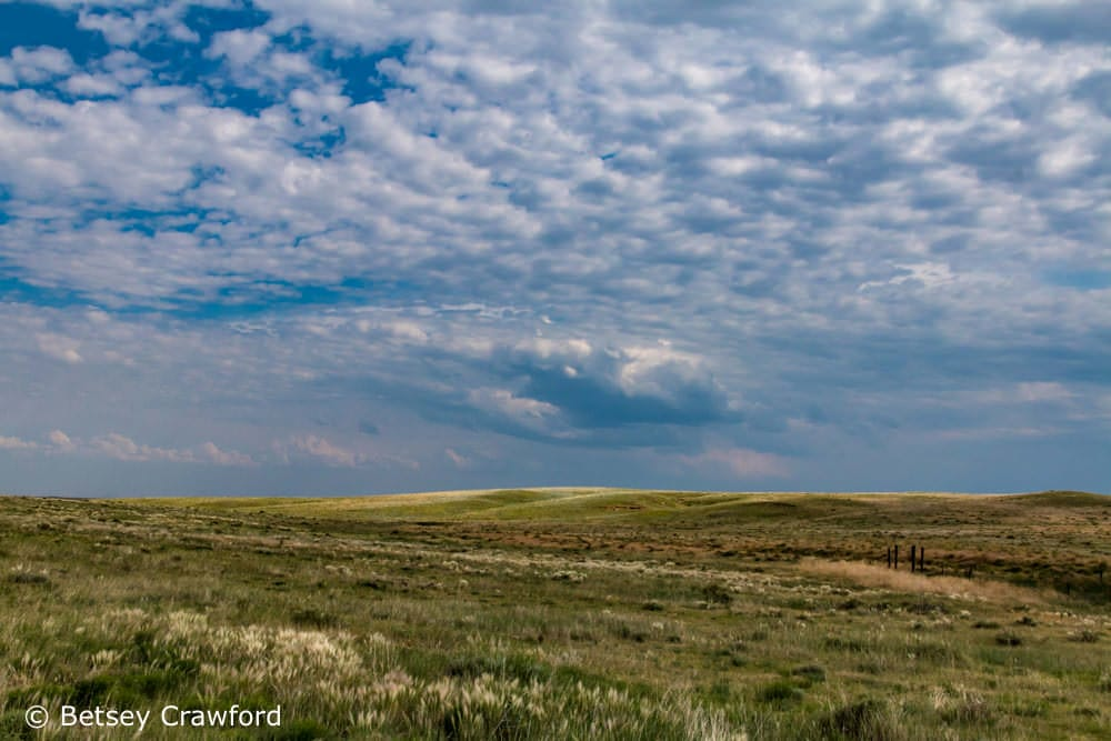 Prairie grasses in the Pawnee National Grassland, Colorado