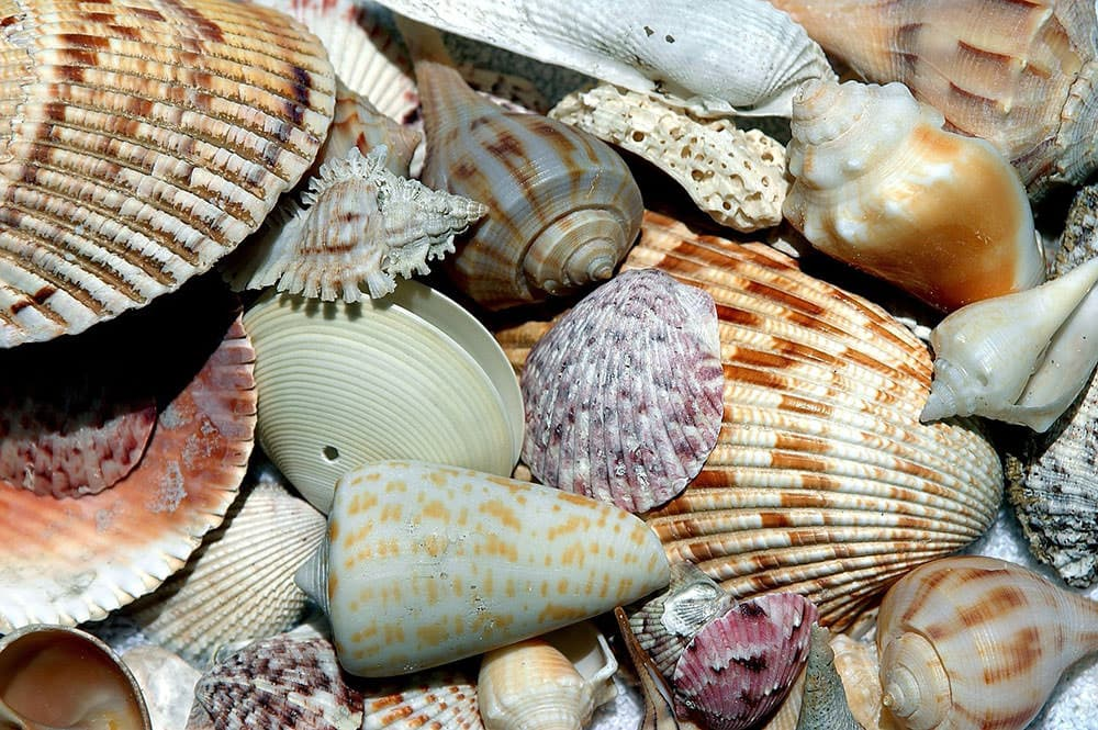 The power of centration shows in seashells