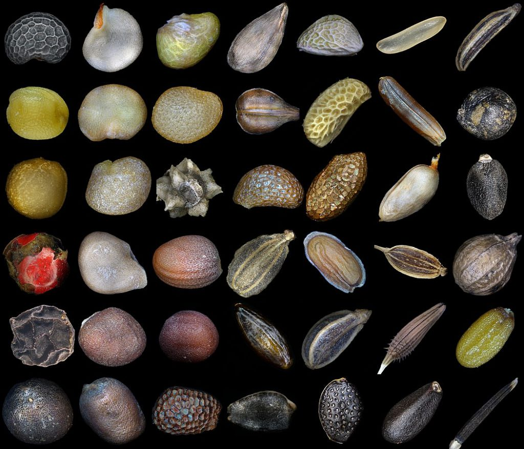 Micro images of seeds by Alexander Klepnev