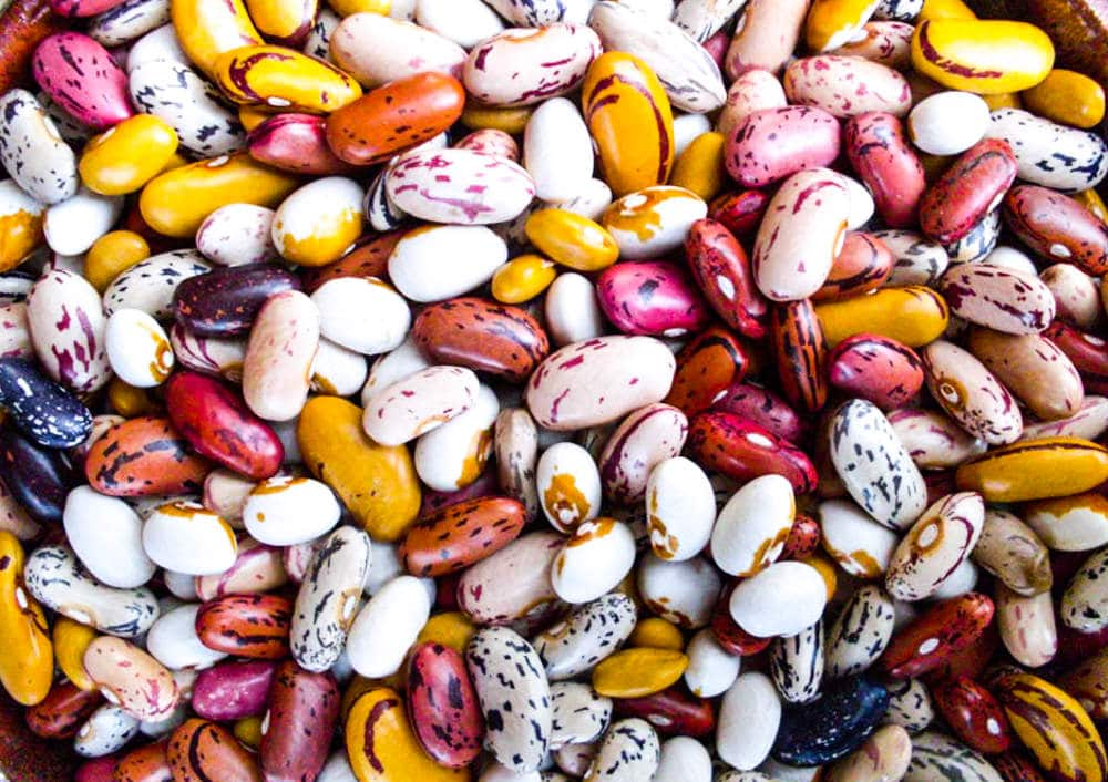 A bowl of jewel-like beans from seedambassadors.org