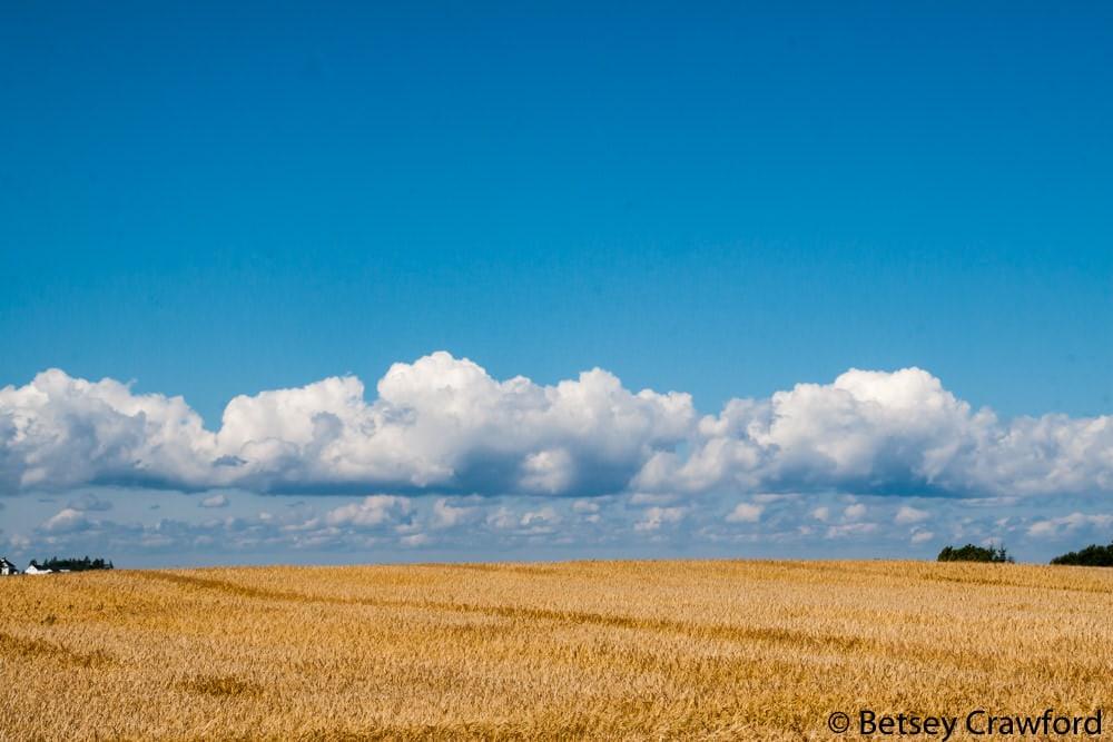 A farm field on Prince Edward Island, Canada by Betsey Crawford