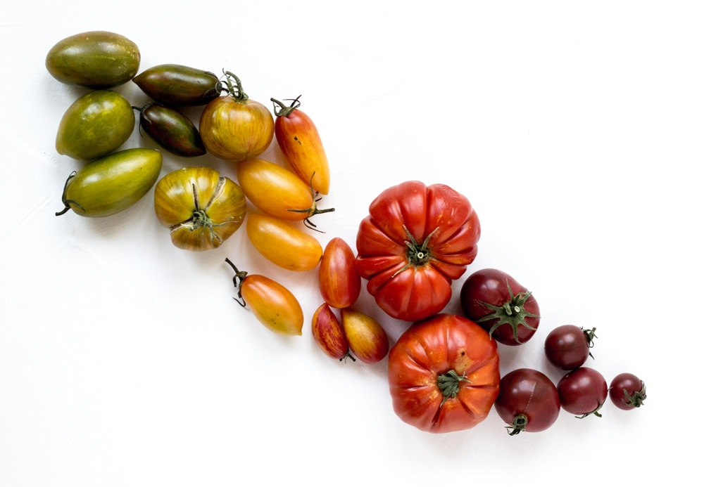 Array of tomato varieties by Reseal Apacionado