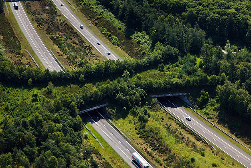 Wildlife overpasses, like this magnificent one in the Netherlands, allows roaming and migrating animals to get to all areas of their territory. Thanks to photographer Siebe Svart, who holds the copyright.