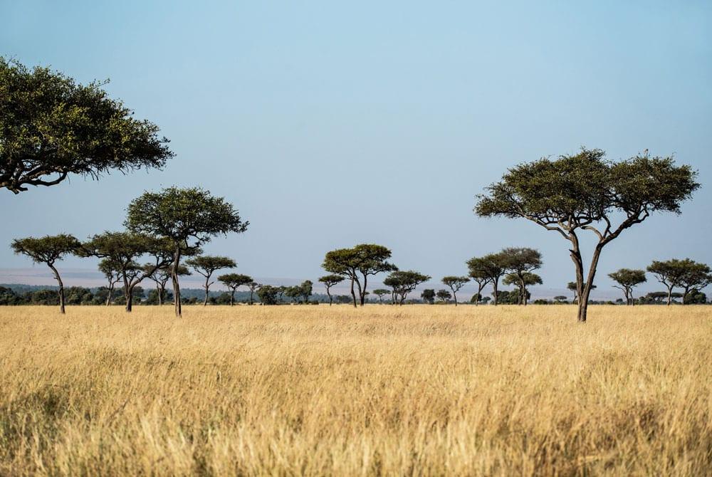 Masai Mara National Reserve, Kenya. Photo by David Clode via Unsplash