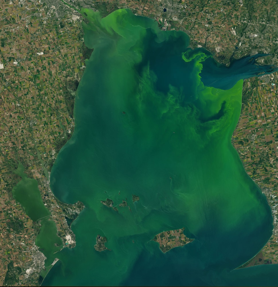 Rights of nature: Lake Erie's algae bloom. Photo from NASA's Earth Observatory