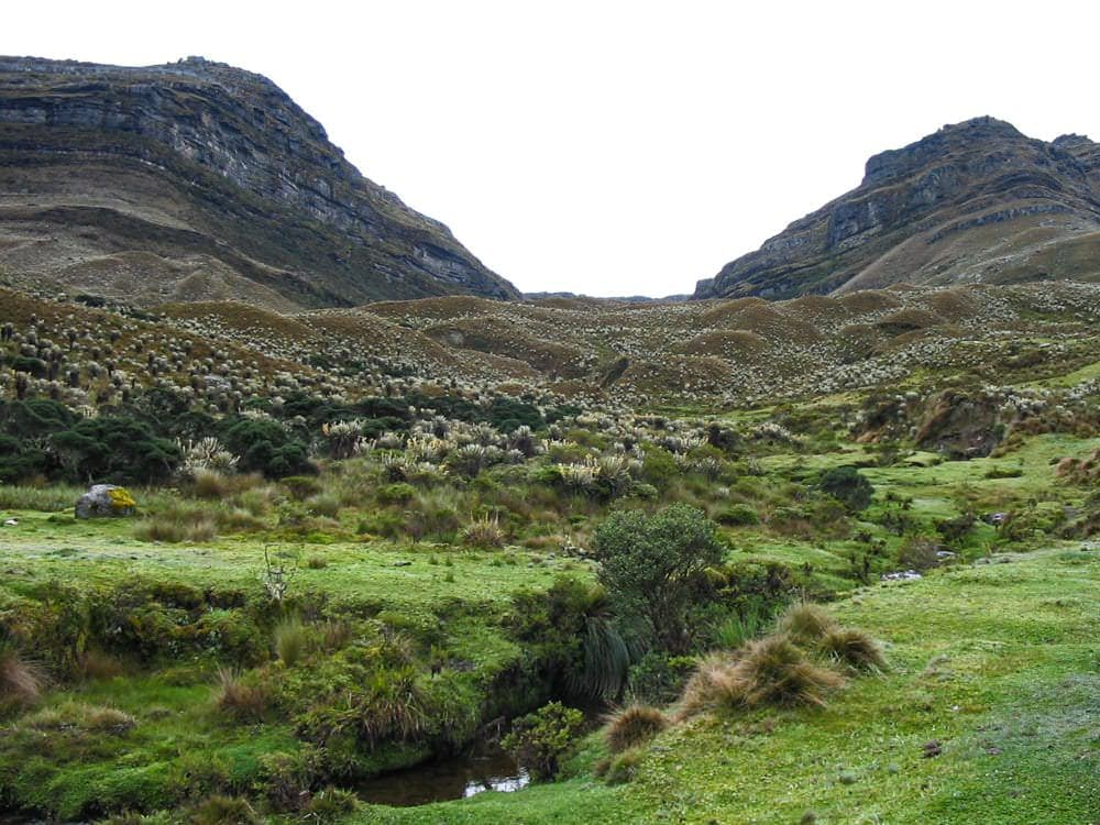 The Paramo ecosystem in Columbia has been granted rights.