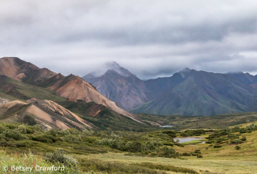 Mountains and valley in Denali National Park, Alaska by Betsey Crawford