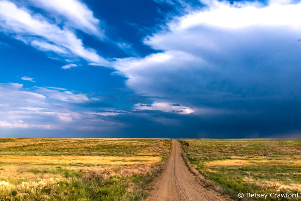 Native language: The grassland ecosystem can be found all over the world. This is the Pawnee National Grasslands in Colorado
