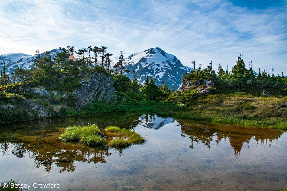 An alpine lake near the Salmon Glacier in the Tongass National Forest supports a habitat of stunted trees and small plants in that cold, windy environment by Betsey Crawford