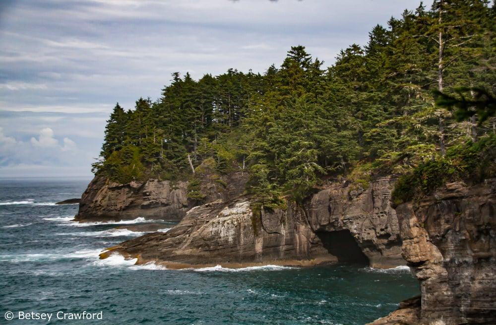 Native language: conifers on the rocks of coastal Washington by Betsey Crawford