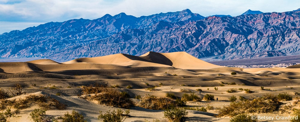 Sand dunes in Death Valley, one of the most extreme of desert ecosystems in the U.S. by Betsey Crawford