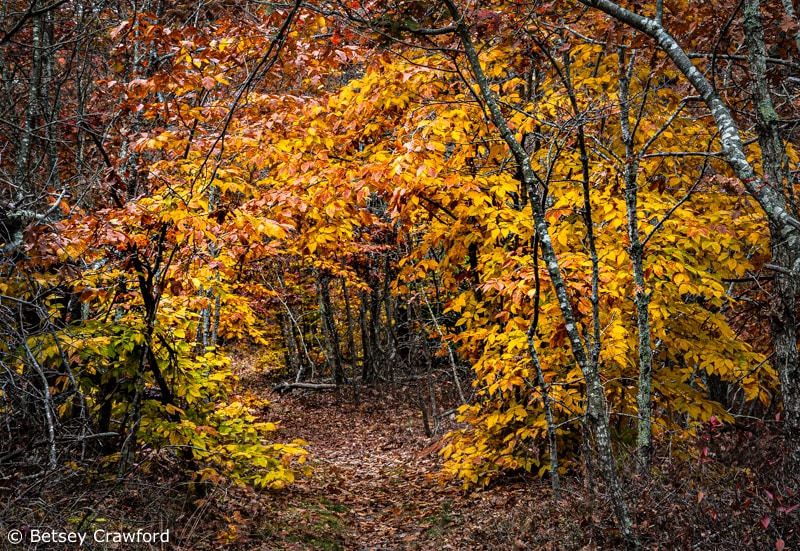 Fall colors in Stony Hill Woods in Amagansett, New York by Betsey Crawford